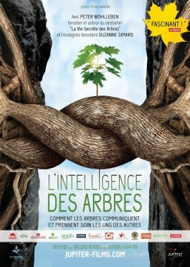 intelligence_arbres.jpeg